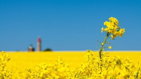 Sask. canola producers seek China resolution as seeding begins