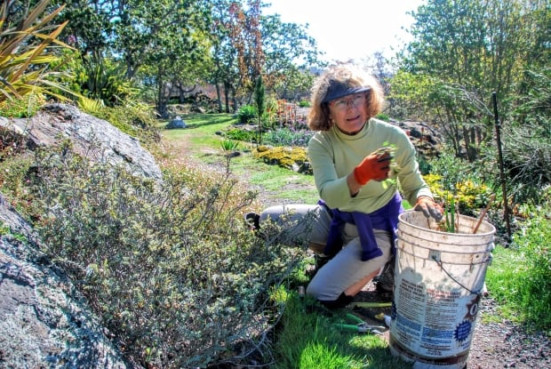Dorothy Smith, volunteer gardener