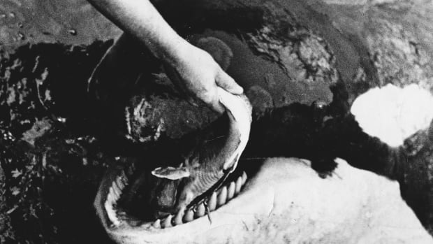 The teeth that had terrified humans for years . . . and the lesions that covered