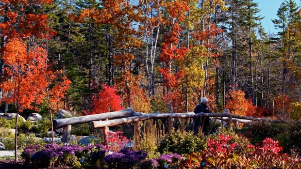 Master gardener Brian Minters tips for the fall season British