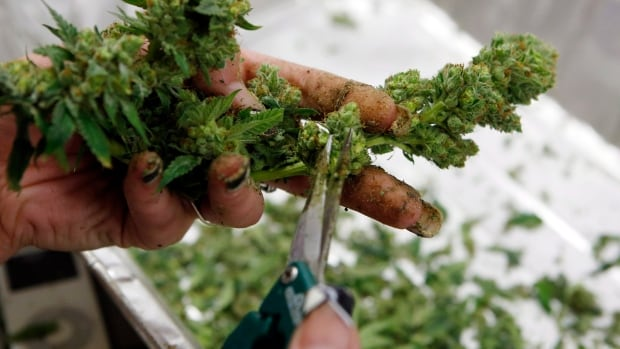The Siksika First Nation hopes to grow medical marijuana in a $8.2-million facility in an industrial park east of Calgary.
