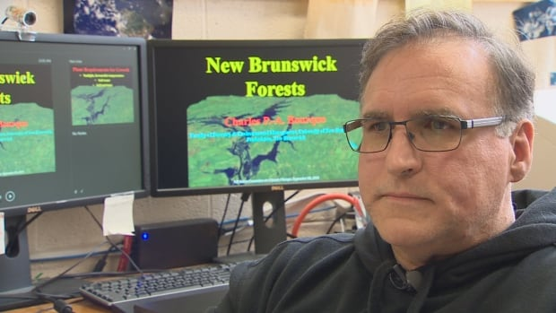 UNB forestry professor Charles Bourque says his computer modeling shows softwood species such as balsam fir will gradually disappear from New Brunswick's forests over the next 80 years.