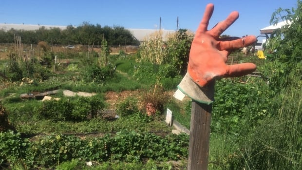 In Sacramento county alone, prime California farm country, 30 schools are within half a kilometre of fields that receive 14 million kg of pesticides.
