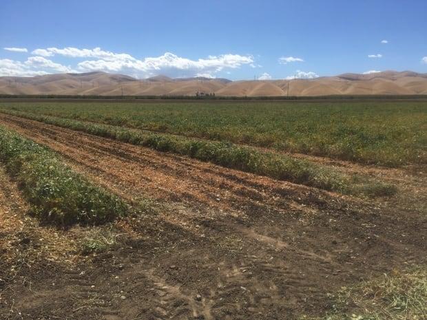 San Joaquin Valley - Farmland-13