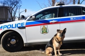 Diego, Saskatoon police service dog