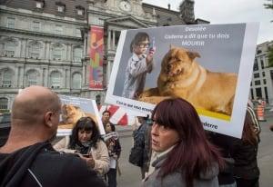 Montreal Pit Bull Ban 20160926
