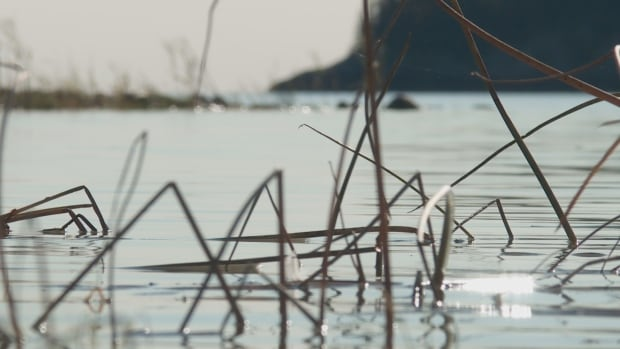 Changing water levels are impacting those who live around the Peace-Athabasca delta.