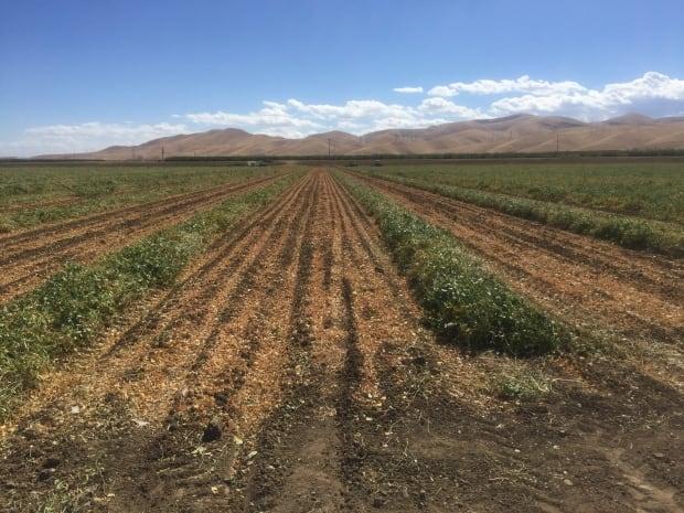 San Joaquin Valley - Farmland-12