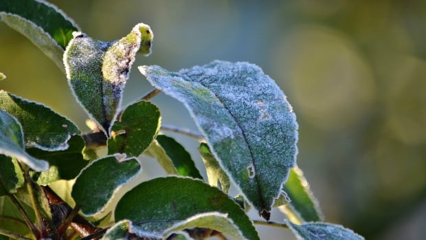 Thunder Bay, Ont. saw its first frost of 2016 on Oct. 8.