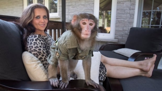 Yasmin Nakhuda at home with her monkey Caesar, a Japanese macaque, in Pontypool, Ont.