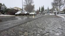 Snow Saskatoon