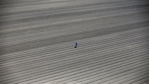 California's catastrophic drought has entered its sixth year. Here, a worker walks through farm fields in Los Banos.