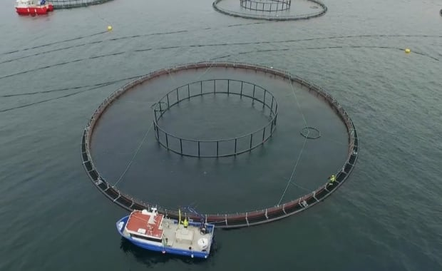Aqua Maof Group Marystown sea cages