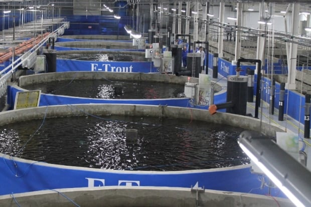 Marystown an obvious choice for norwegian style salmon for Indoor fish farming