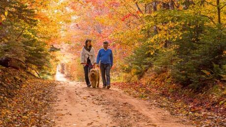 Couple walks w dog on scenic PEI heritage road