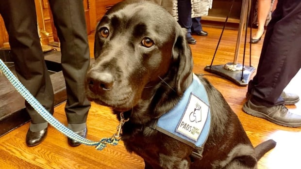 Service dog schools across Canada say they can't keep up with demand, leaving some with extensive wait lists while others have had to stop accepting applicants altogether.