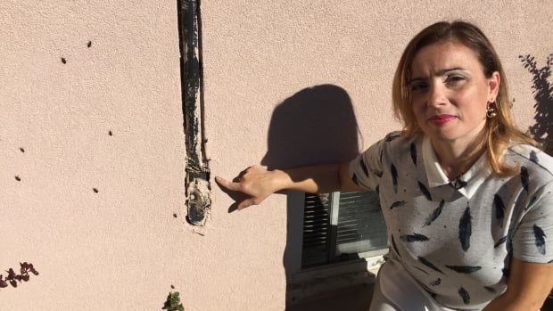 Nelia Teves said hundreds of boxelder bugs on her house near Jane Street and Lambton Avenue make it difficult to spend time outside.