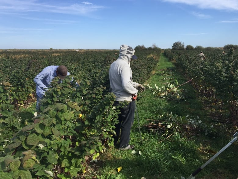 Migrant workers claim cramped quarters a problem at COVID-19 stricken Okanagan farm
