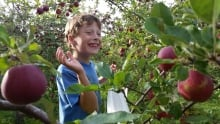 Sebastian Connor enjoys apple picking at Wintermoor Orchard