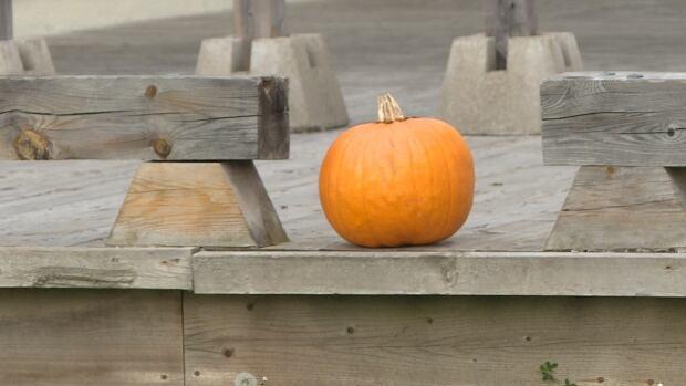 pumpkin bathurst