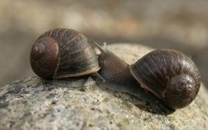 Jeremy the snail 2