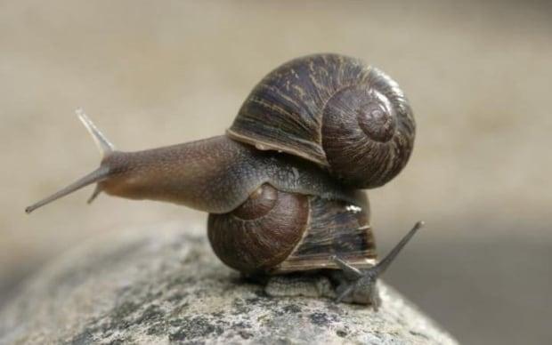 Jeremy the snail 1