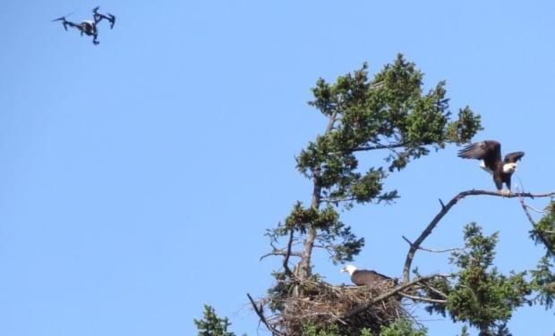 Conservation Officer Service drone eagle fine