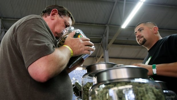 A medical marijuana user smells a jar of pot in California, one of the seven states where voters are expected to vote to liberalize cannabis laws in the Nov. 8 election.