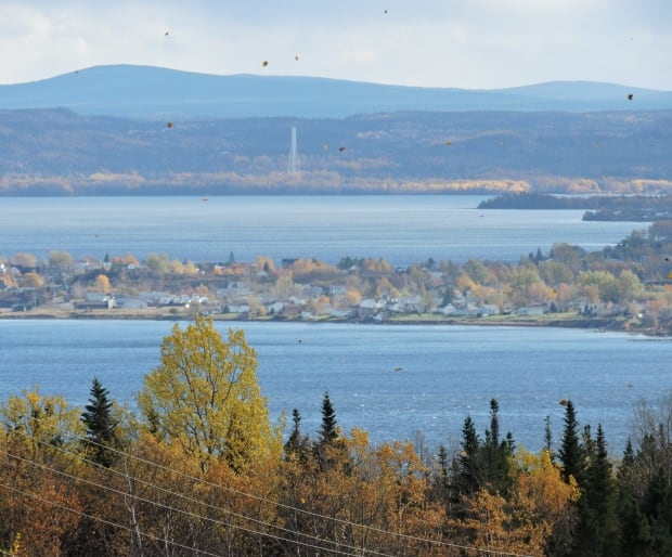 botwood fall leaves