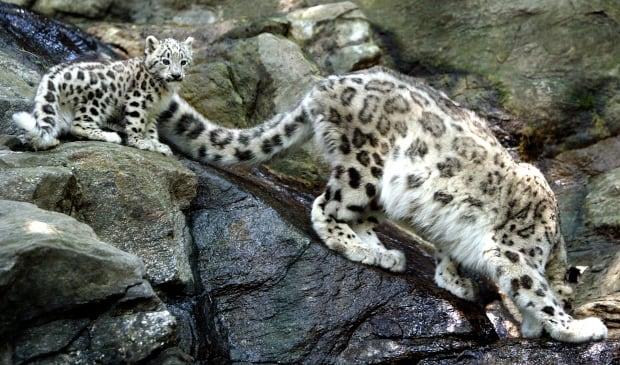 wildlife populations