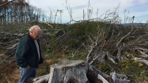 Jim Hamilton surveys a clearcut near his home in Joggins. The province will begin using new tools to evaluate if proposed cuts are sustainable.