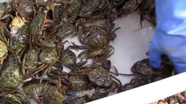 Crabs in the bucket