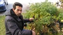 Syrian refugee farmer agriculture Calgary