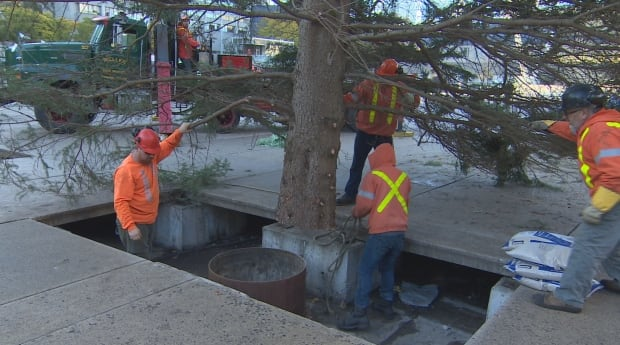 It's here! Christmas tree hoisted up in Nathan Phillips Square ...