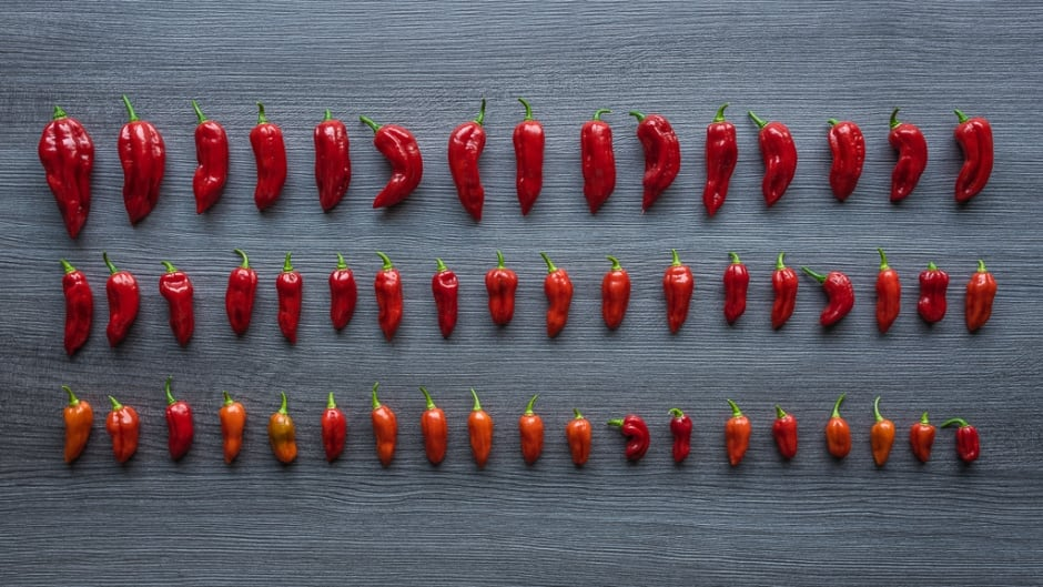 The Ghost Pepper (Bhot Jolokia) was the world's hottest chilli pepper, 400 times hotter than Tabasco sauce. In 2012 it was superseded by the Trinidad Moruga Scorpion and in 2013 by the Carolina Reaper, with individual peppers rating over 2.2 million SHU.