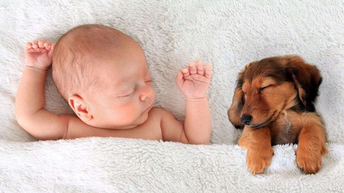Study suggests pet exposure might help protect babies from allergies, obesity