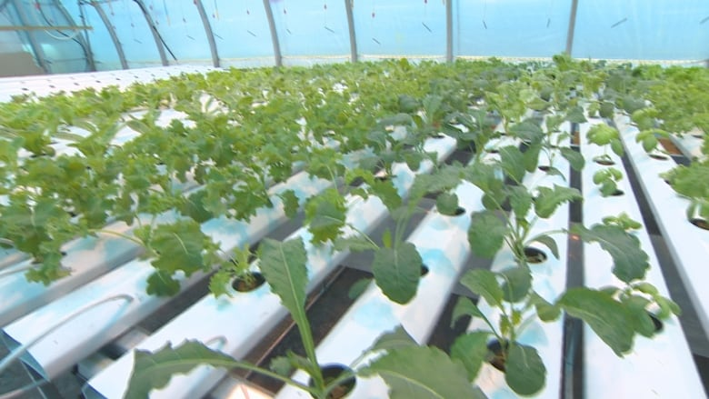 The obsession with hydroponics and indoor growing damages ... on pruning plants, bayou plants, green plants, farm plants, indoor plants, history plants, horticulture plants, watering plants, fertilizing plants, pepper plants, annuals plants, cartoon fern plants, tomatoes plants, nursery plants, potted plants, landscaping plants, water plants, tropical plants, sci-fi plants, how grow zinnia plants,