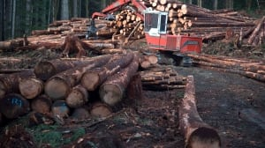 U.S. to impose duties as high as 24% on Canadian softwood lumber, commerce secretary says