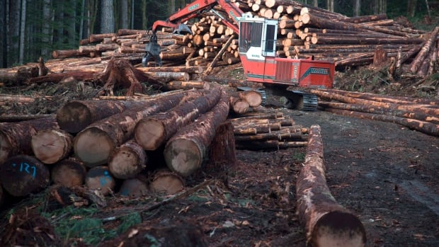 US lumber industry seeks duties on Canadian softwood lumber