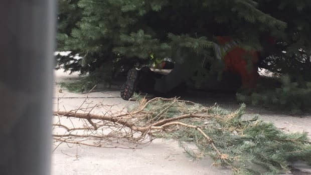 Christmas Tree Marks Official Arrival Off 2016 Holidays In