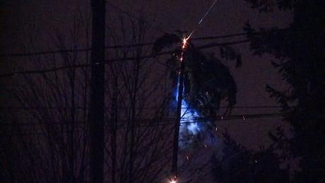 wind storm Nov 24 gp mendoza tree powerline