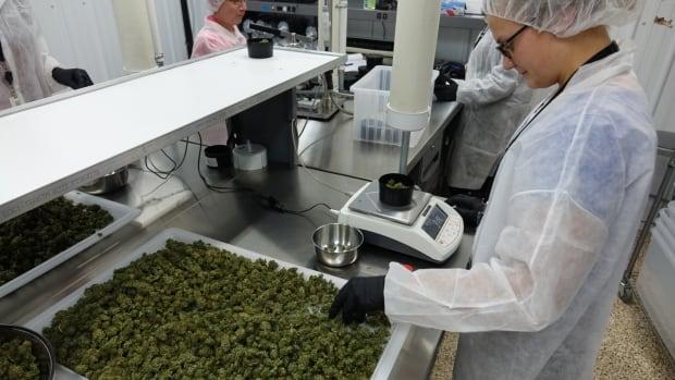 Aurora Cannabis distribution