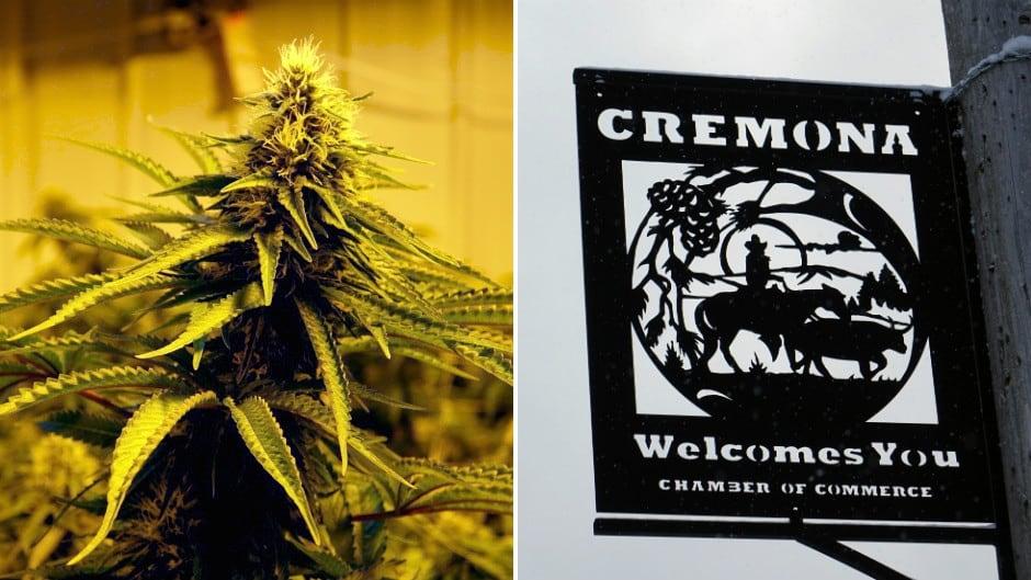 Cremona Marijuana Collage