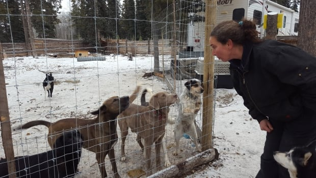 Shelley Cuthbert at her kennel in Tagish, Yukon, in 2016. She's in court this week defending herself against a group of neighbours who want to shut her kennel down.