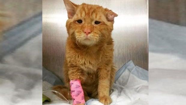 Windsor Adopt Cat