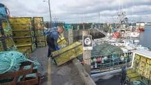 NS Lobster Season dumping day