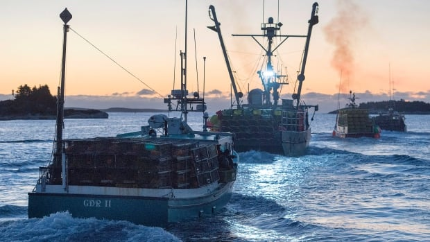 Hundreds of lobster boats take to the water from the shores of southwest Nova Scotia each November, as the country's most lucrative lobster fishery opens.