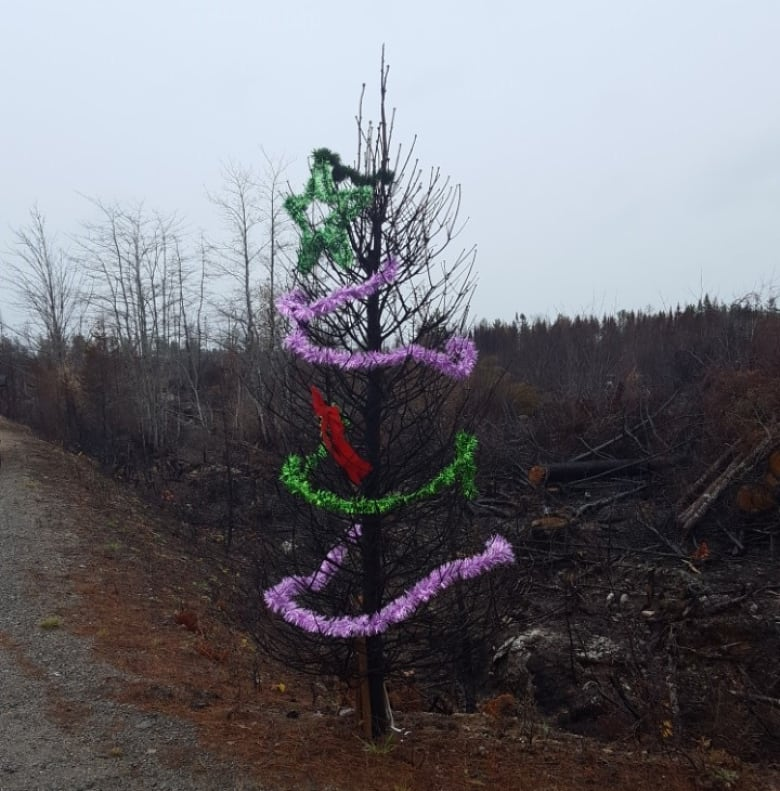 Why a charred Christmas tree means so much to a family who ...