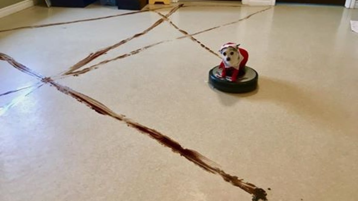 Rover's Roomba revenge: Robot vacuums can scatter scat if ...