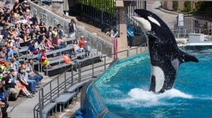 B.C. sites being considered for world's 1st 'retirement home' for captive whales
